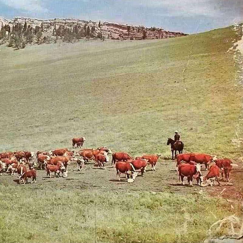 Cowboy Songs Beginning Package